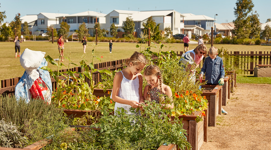 The community garden at Stockland's Bells Reach community on the Sunshine Coast (Qld)