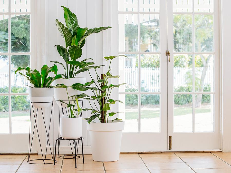 Easy Diy Indoor Garden Tips And Tricks