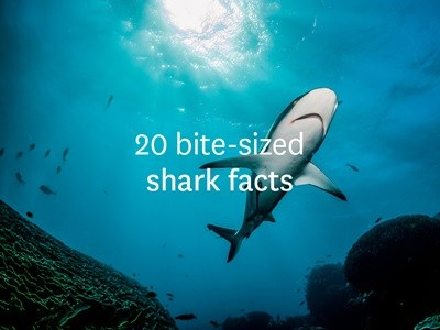 20 bite-sized shark facts